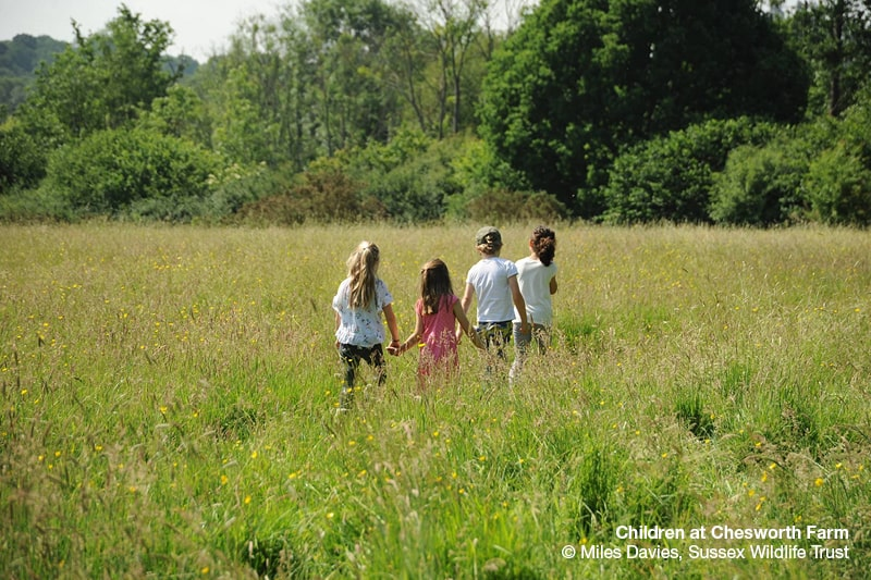 Children in a meadow at Chesworth Farm. Copyright Miles Davies, Sussex Wildlife Trust