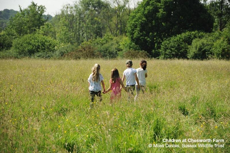 Children in a meadow at Chesworth Farm. Copyright Miles Davies, Sussex Wildlife Trust